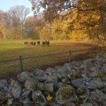 Trav, häst, stall Henessi, Henessi, älska trav.