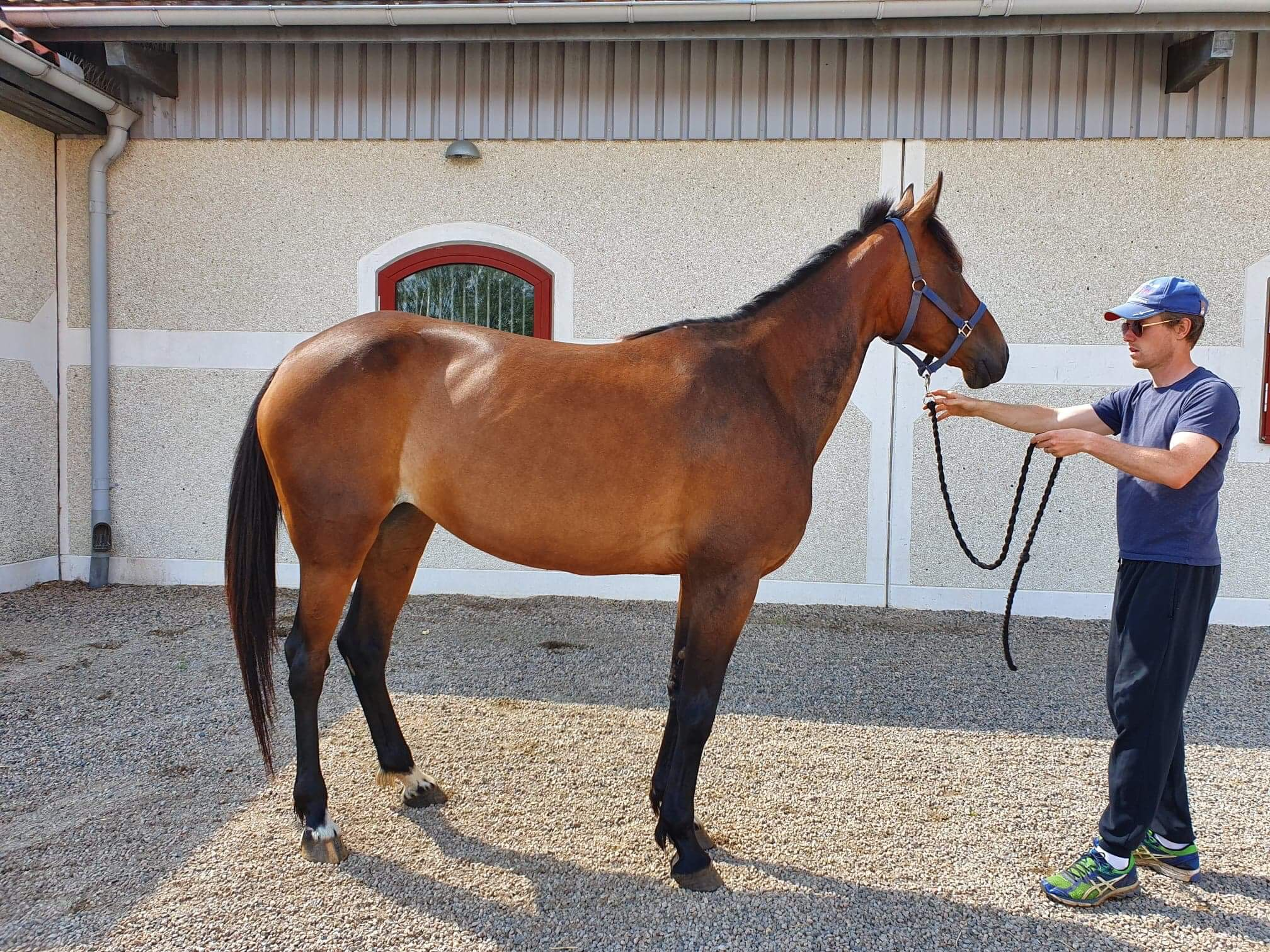 Top Fist Etoile, Face Time Bourbon, Stall Henessi, Trav,